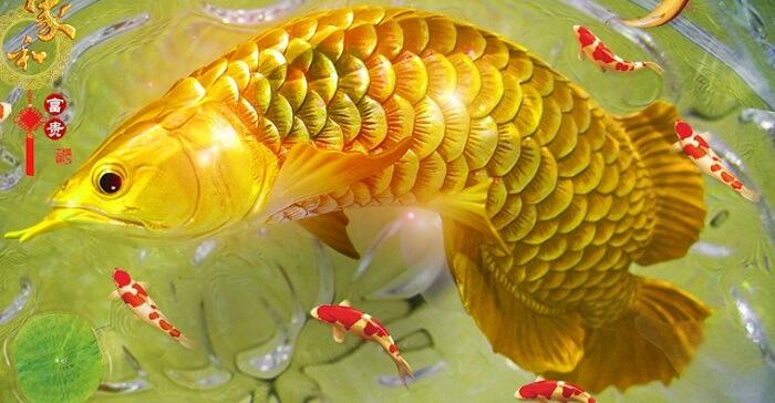 Mơ Thấy Cá Chép Vàng Có Ý Nghĩa Gì? Nên Đánh Con Nào?