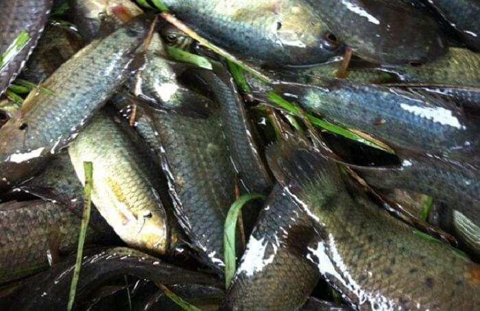 Mơ Thấy Câu Được Nhiều Cá Có Phải Điềm Lành? Nên Đánh Con Gì?