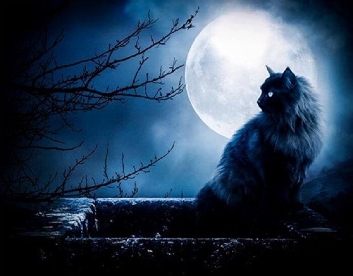 Giải Mã Giấc Mơ Thấy Mèo Đen Tốt Hay Xấu? Đánh Con Gì Trúng?