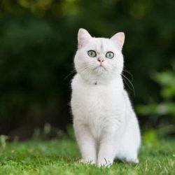 Nằm mơ thấy mèo trắng đánh con gì